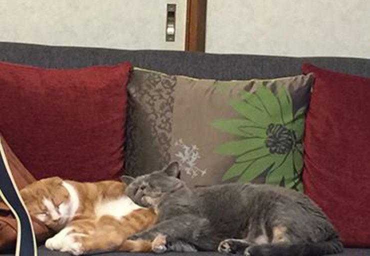 猫と戯れ部